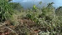 Source of nile at Jinja, Uganda