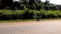 Baboons along the road in Uganda