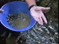 "The Thompson: ""Panning for Gold"" - February 21, 2012"