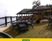 Falcon in Hotel Tilapia, Mwanza, Tanzania