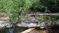 Hixon Creek 001 July 2014