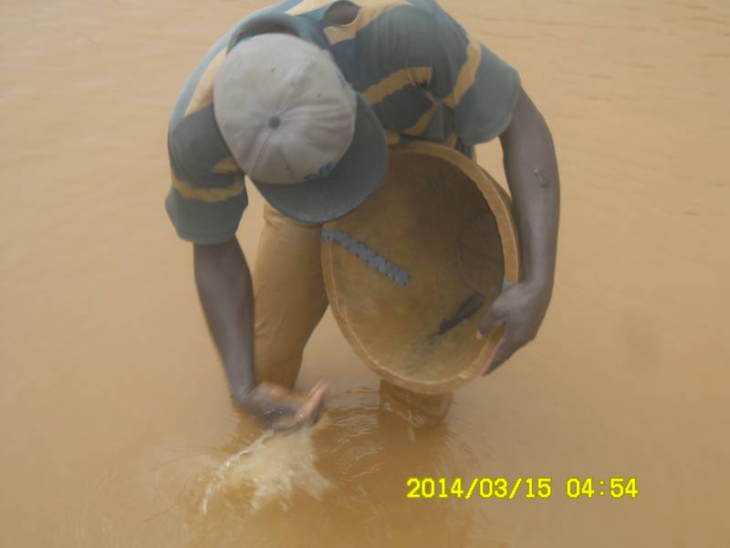 Miner panning the gold concentrates
