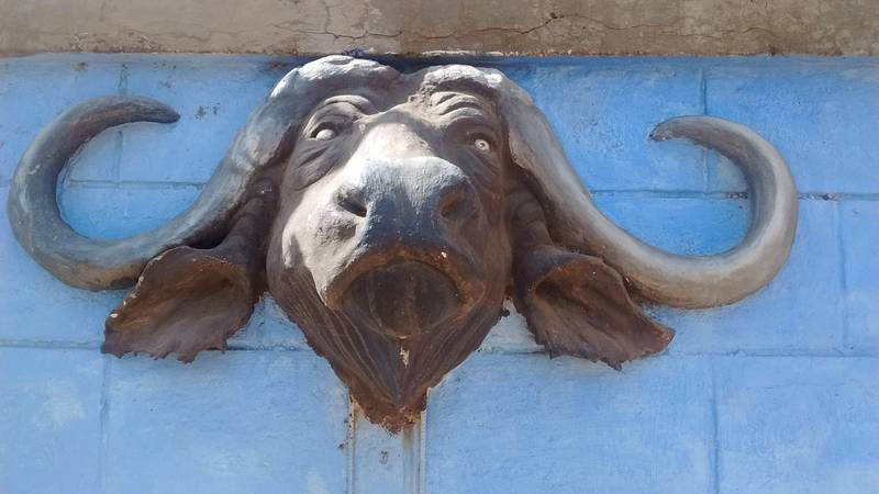 African Buffalo decoration in Tanzania, just before moving to Kenya