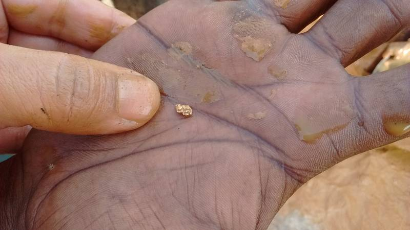 Gold nugget on the hand of a miner