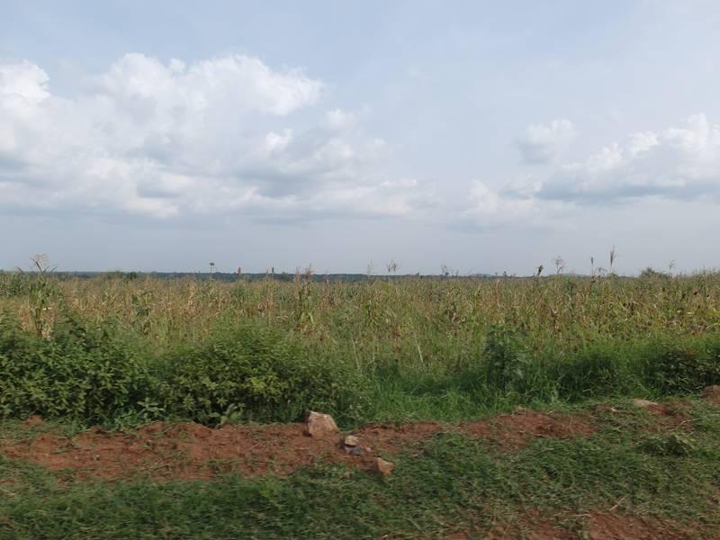 The land under the exploration license in Uganda