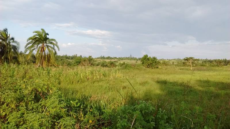 Panorama of the nature in Uganda