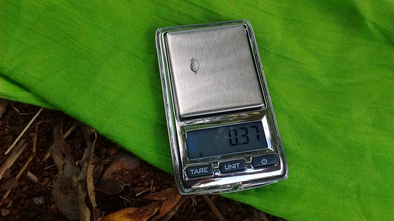 0.37 grams of gold on the pocket scale