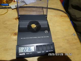 2020-03-28, 2.236 grams of natural gold nuggets on the balance scale